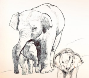 Drawing by Deanna Yildiz, drawn in ink of an elephant elder with two baby elephants