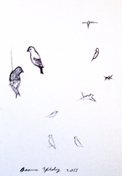 birds_in_flight_sketch