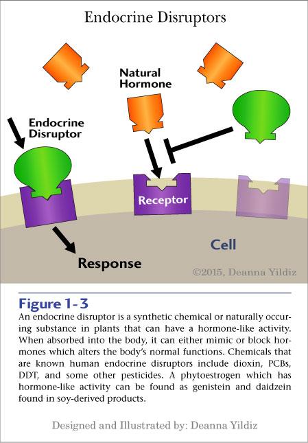 Endocrine Disruptor