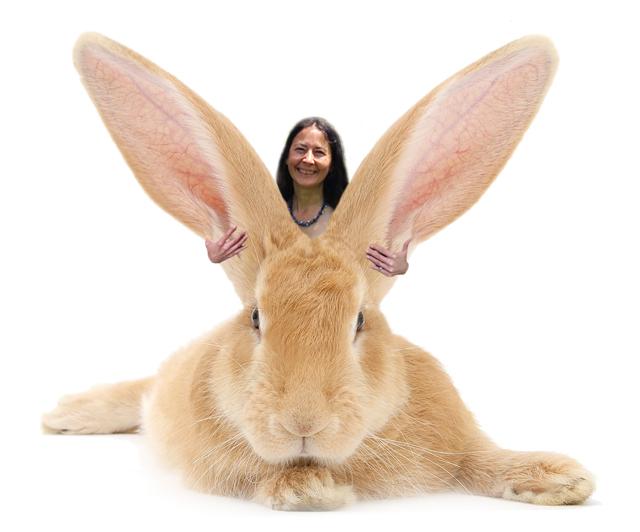 Riding a bunny